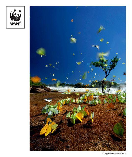 WWF (world wildlife fund)