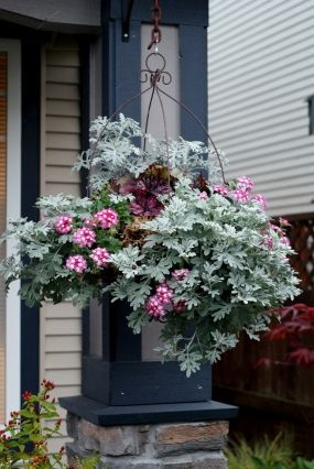 container garden#hanging basket