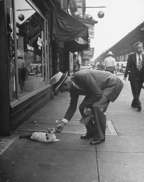 Man bending over to touch cat sitting on sidewalk. Los Angeles, 1946 ©Nina Leen