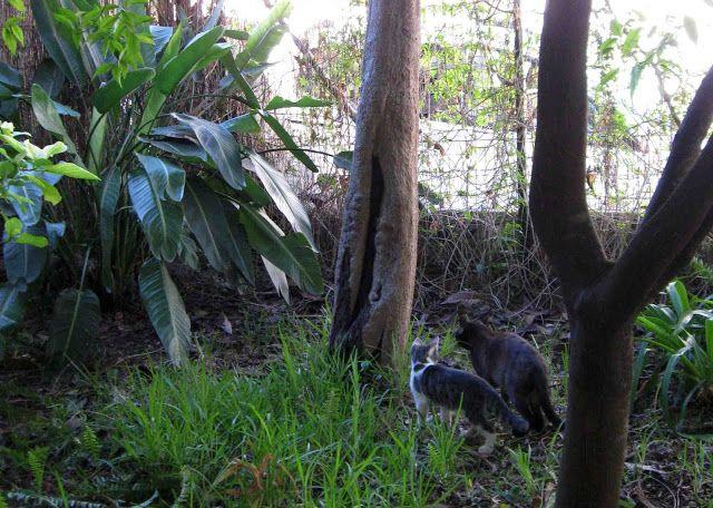 LUIS DESENHA: Tigres no Quintal