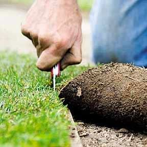 Lawn Turf Suppliers in the UK