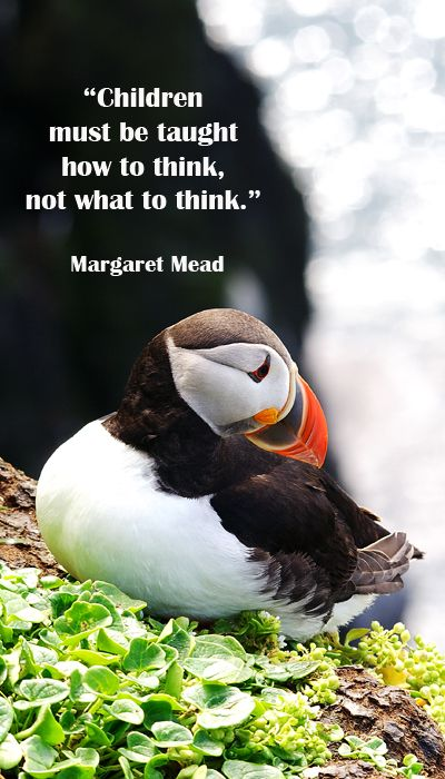 """""""Children must be taught how to think, not what to think."""" Margaret Mead"""