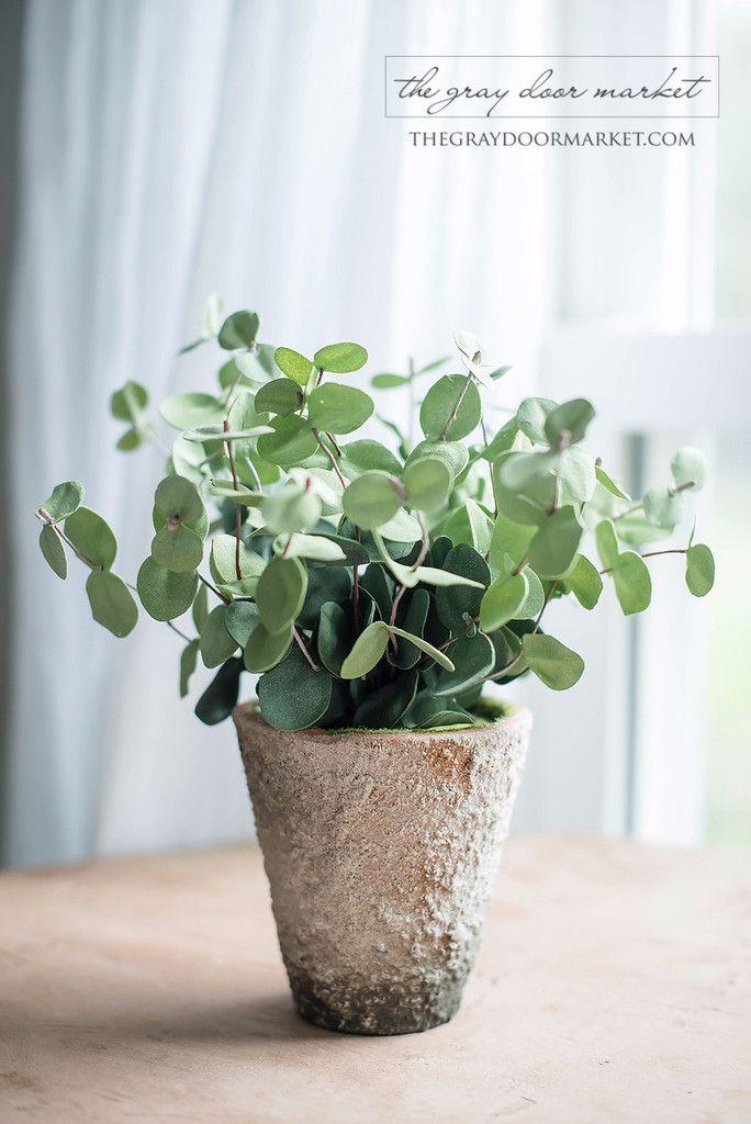 best 25 eucalyptus plant indoor ideas on pinterest