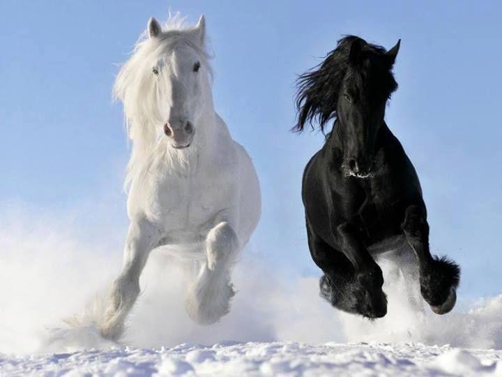 Paarden in de sneeuw.