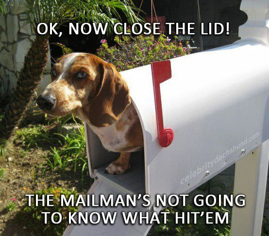 funny dachshund pictures | ... Bads News & Some Really Good News.. – Crusoe the Celebrity Dachshund
