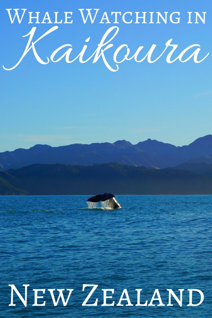 Read all about our Whale Watching adventure in Kaikoura, New Zealand. Post includes a quick guide to Kaikoura including how to get there, where to stay and what to eat!