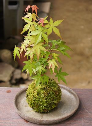 ♥ this. It´s called kokedama, a Japanese moss ball. I´ll definitely try this one day