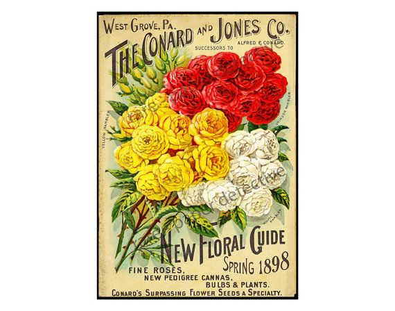 Antique Seed Catalog Print 7 x 10 Floral Ephemera 1898