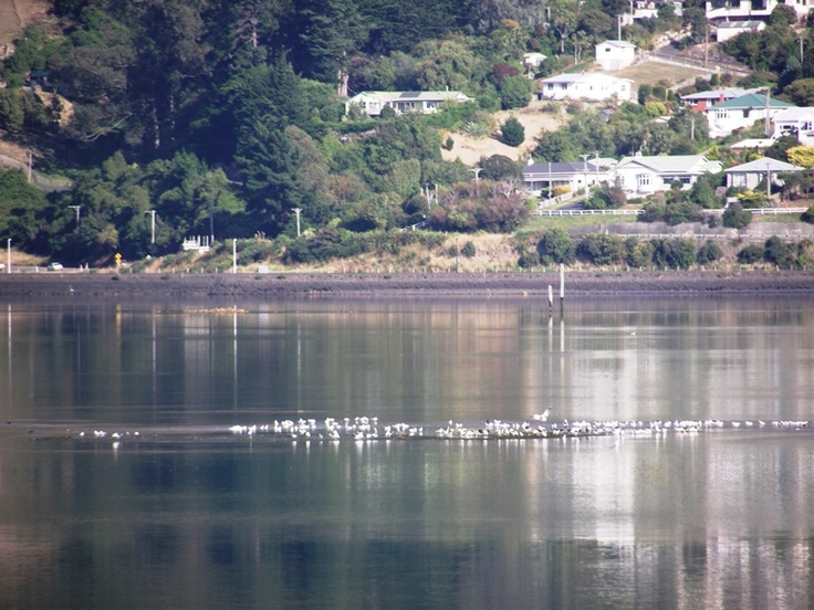 Early morning Raynbird Bay, Otago Peninsula, New Zealand.