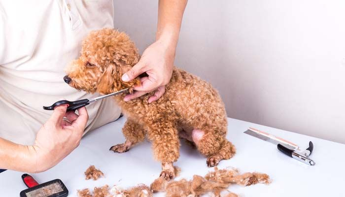 What Are the Best Silent Dog Clippers or Manual Clippers for Noise-free Grooming of Dogs