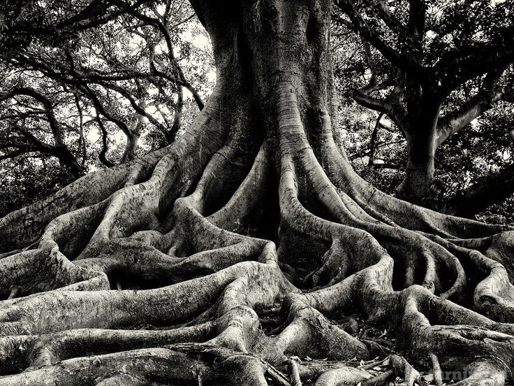 Montgomery GilchristRoots System, Independence Artists, Nude Roots, Artists Montgomery, Trees Roots, Awesome Photos, Roots Trunks, Montgomery Gilchrist, Wall