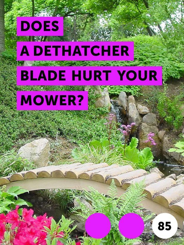 Does A Dethatcher Blade Hurt Your Mower Growing Grass Angel Trumpet Plant Garden Soil