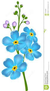 how to draw a forget me not flower