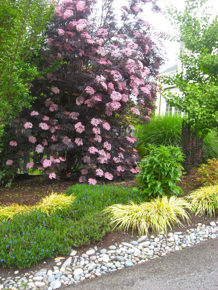 medina cottage style garden gardens hakone and plants. Black Bedroom Furniture Sets. Home Design Ideas