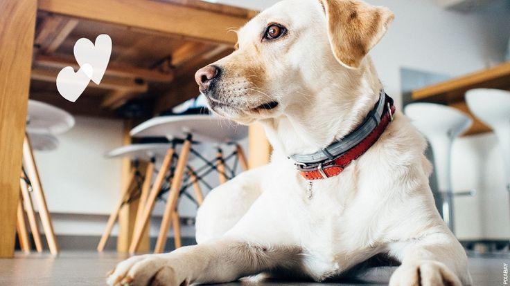 4+restaurantes+onde+pode+levar+o+cão
