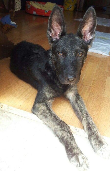 Pippo, 3 mesi