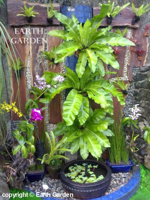 1000 ideas about tropical gardens on pinterest for Landscaping plants in the philippines