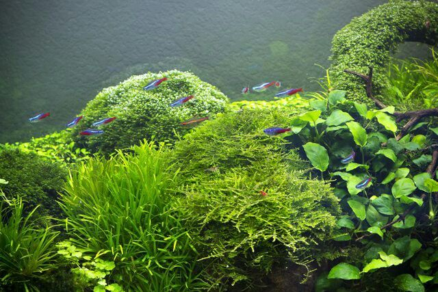 Natural fish tank vizi vil g pinterest natural fish for Natural fish tank