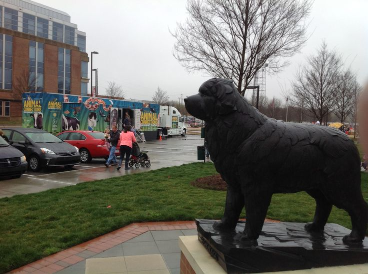 A canine mascot oversees the arrival of the #AnimalConnections truck, the Smithsonian's only exhibition on 18 wheels, in North Carolina. #pets #animals #veterinarymedicine http://animalconnections.com/