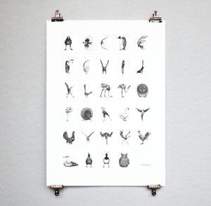 Bird alphabet (swedish)
