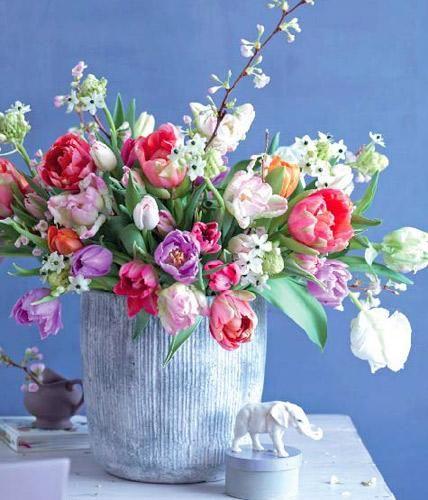 Tulpen, Kirschen und Milchstern: Kontrastprogramm in der Vase.