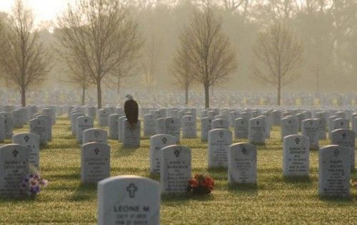Bald Eagle Lands on Grave at US Military Cemetery