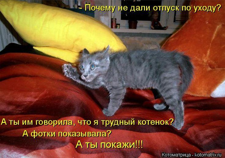 - Почему не дали отпуск по уходу? А ты им говорила, что я трудный котенок? А фотки показывала? А ты покажи!!!