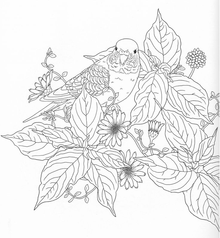 Harmony Of Nature Adult Coloring Book Pg 9