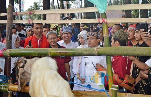 Bupati Banyuwangi Abdullah Azwar Anas mengamati kambing ettawa yang juga penghasil susu sebagai mata pencaharian masyarakat Gombengsari (Foto : Hakim Said/BanyuwangiTIMES)