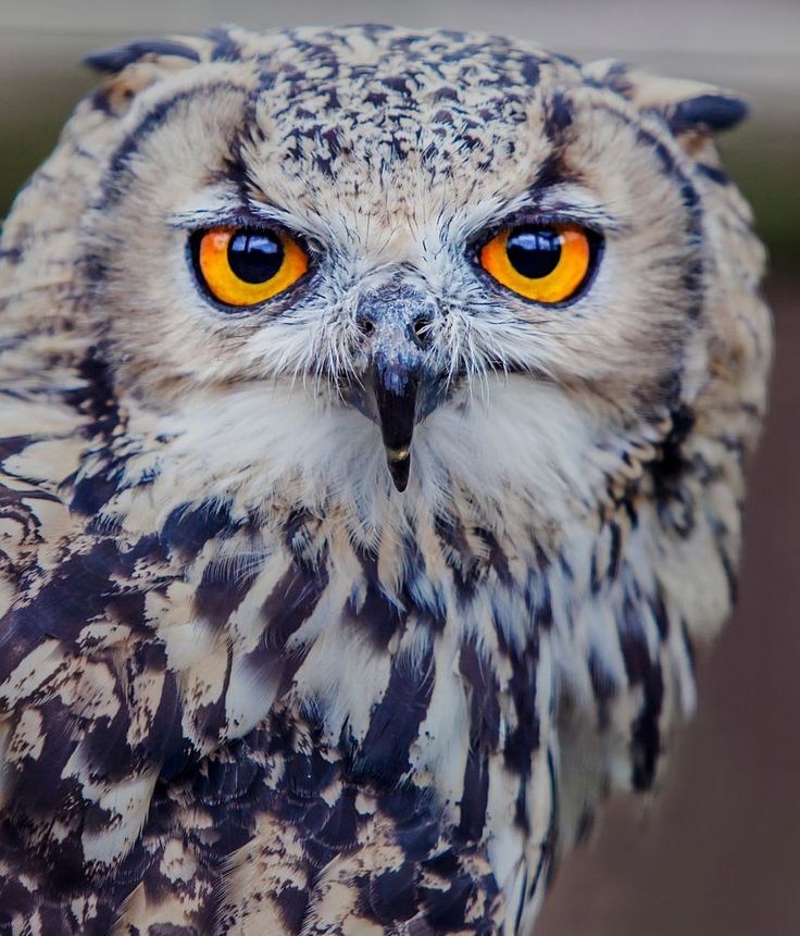 I have my eye on you! by Lawrence G Photos on 500px
