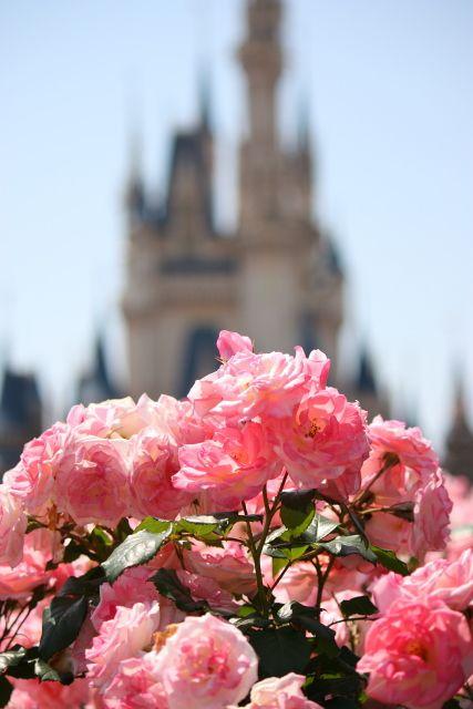 Flowers in bloom near Cinderella's Castle in Disneys Magic Kingdom Disneyworld