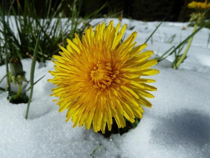Flowers - Trentino  © Marco Pozzato - our Facebook fan