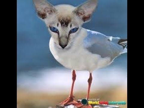 Funny Seagull Pranks 2014
