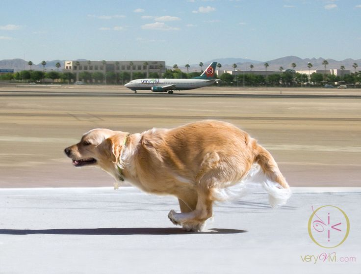 """""""Air Trafic Control, I Have To Catch My Jet!"""" by Very Vivi"""