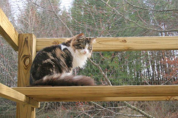Build an All Season Outdoor Cat Habitat, in 16 easy steps.  Ideas for our Habitat.  {Picture of Decking, doors and clean out run materials list.}