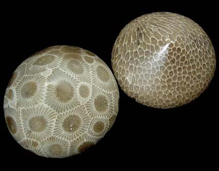 Petoskey stones! The Michigan state stone!!