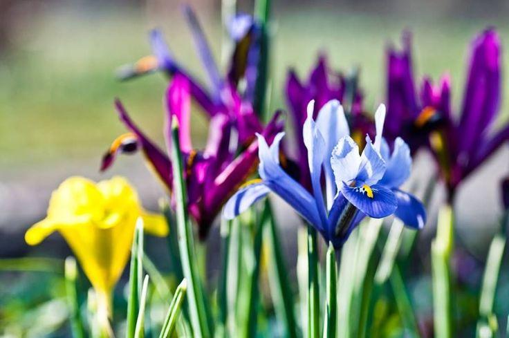 Ilyen gyönyörű, mesés a tavasz a Füvészkertben - Nők Lapja Cafe