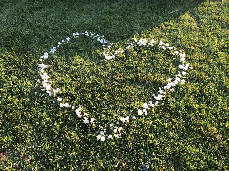 Heart shape floor decoration with white roses on grass