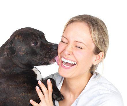 Apprenez la propreté à votre chiot ou chien ! - Site de offre-solution !