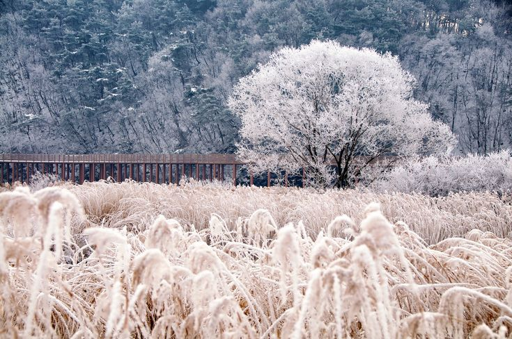 Soyang Bridge No. 5, Chuncheon, Korea - cold, winter, snow, ice, frost, frozen, nature, photography, weather