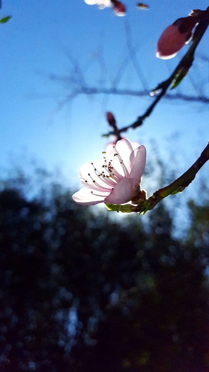 Nature | Flower | Spring | Pink