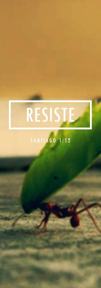 Santiago 1:12 Dichoso el que resiste la tentación porque, al salir aprobado, recibirá la corona de la vida que Dios ha prometido a quienes lo aman.