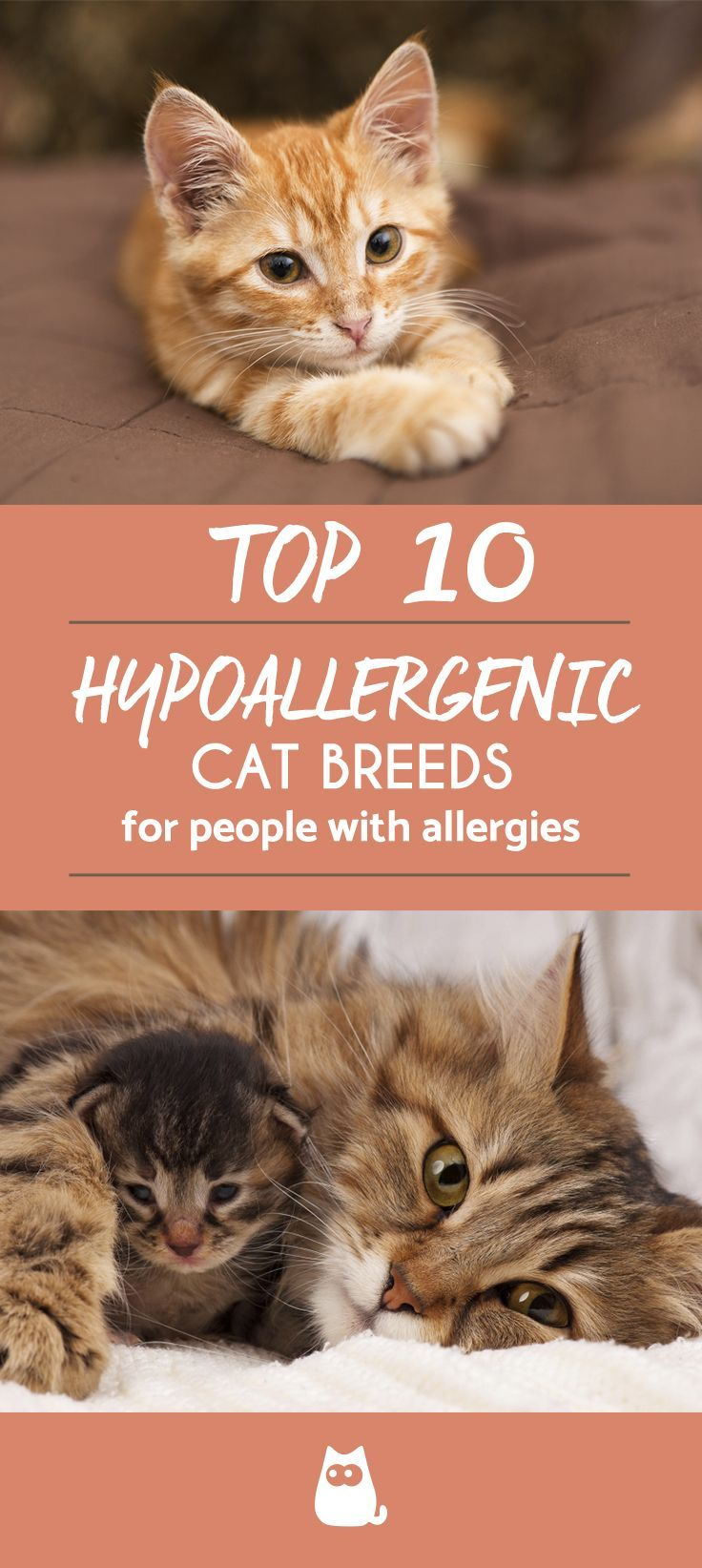 Best Cat Breeds For Allergic Families Cats Katzen Rassen Katzenrassen Alle Katzenrassen
