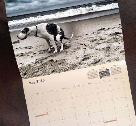 Pooping Dogs Calendar 2015