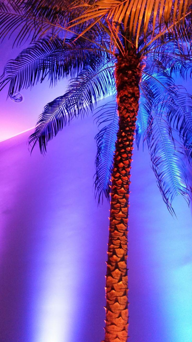 Location /Event/ Palmier Phoenix