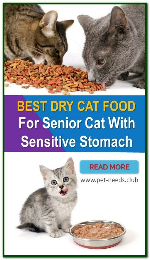 Best Dry Cat Food For Senior Cat With Sensitive Stomach Dry Cat Food Cat Food Sensitive Stomach