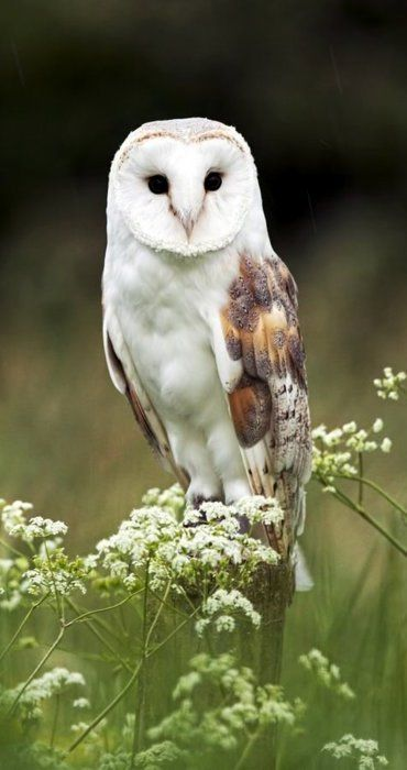An elegant owl among the wildflowers