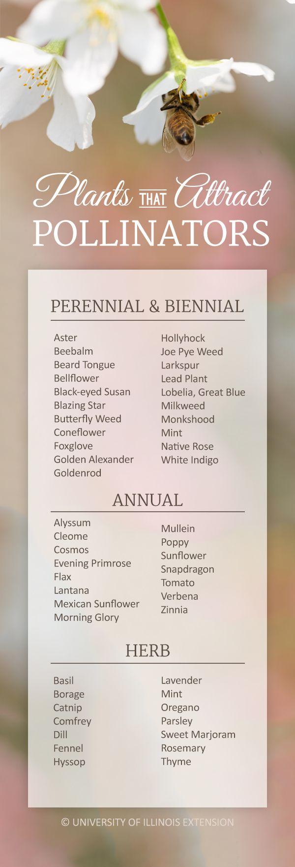 A handy list of plants that attract pollinators! (butterflies, bees, hummingbirds, etc.) #garden #flowers