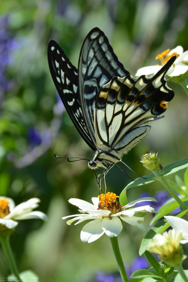 "3547 best images about * ""Insects & Butterflies"" * on ..."