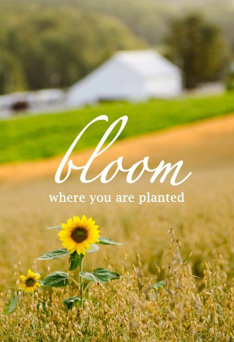 """Bloom where you are planted."""